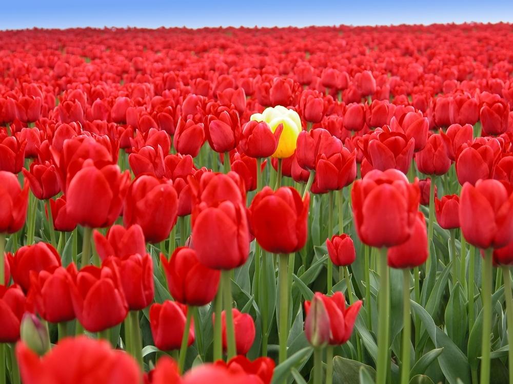 non-conformist flower